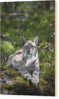 Lynx Wood Print by Yngve Alexandersson