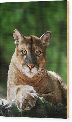 Mac Wood Print by Big Cat Rescue