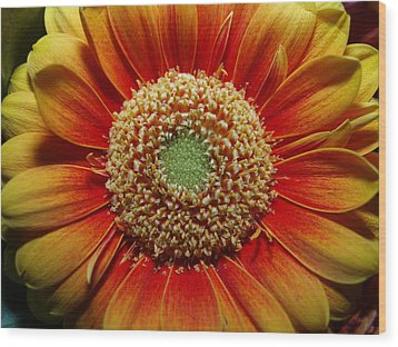 Wood Print featuring the photograph Macro Flower by Michael Canning