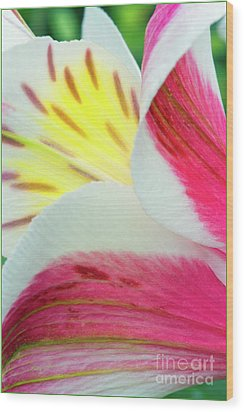 Macro Lily Wood Print
