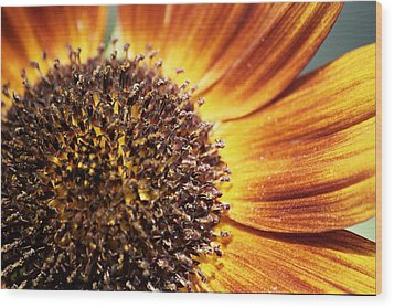 Macro Sun Wood Print