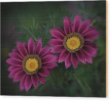 Wood Print featuring the photograph Magenta African Daisies by David and Carol Kelly