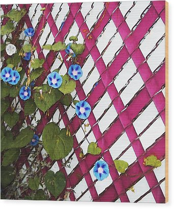 Wood Print featuring the photograph Magenta Chain-link by Shawna Rowe