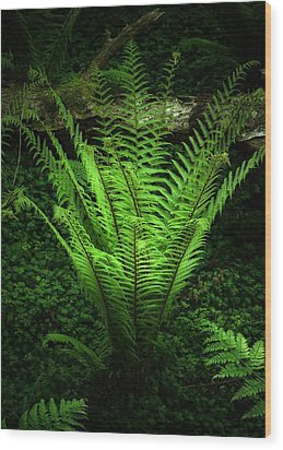 Magic Fern Wood Print by Svetlana Sewell