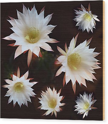Wood Print featuring the photograph Magical Flower by Gina Dsgn