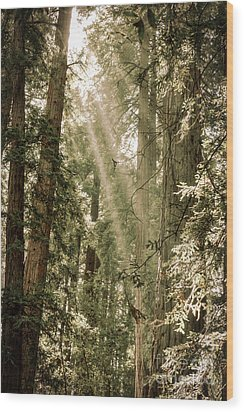 Magical Forest 2 Wood Print