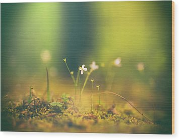 Wood Print featuring the photograph Magical Moment by Shane Holsclaw