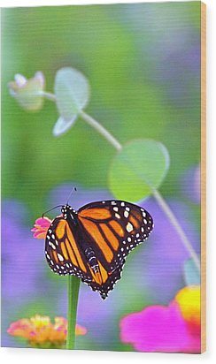 Wood Print featuring the photograph Magical Monarch by Byron Varvarigos