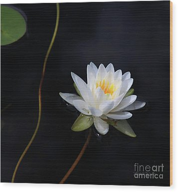Wood Print featuring the photograph Magical Water Lily by Michelle Wiarda