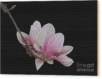 Magnolia #2 Wood Print