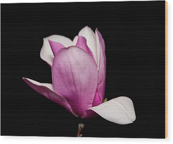 Magnolia At Night Wood Print by Gwen Vann-Horn