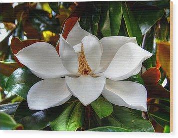 Magnolia Bloom Wood Print by Ronda Ryan