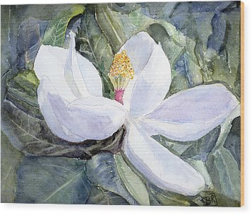 Magnolia Blossom Wood Print by Barry Jones