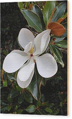 Magnolia Blossom Wood Print by Kristin Elmquist