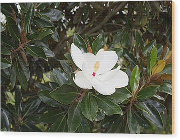 Wood Print featuring the photograph Magnolia Blossom by Linda Geiger