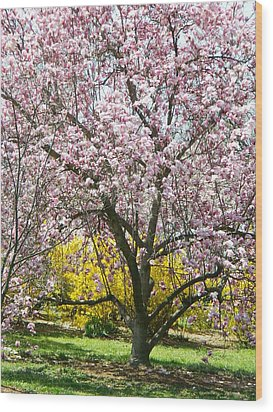 Wood Print featuring the photograph Magnolia Blossoms Galore by Emmy Marie Vickers