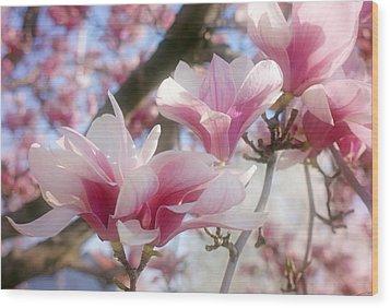 Magnolia Blossoms Wood Print by Sandy Keeton