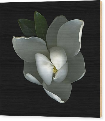 Magnolia Wood Print by Christian Slanec