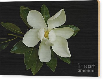 Wood Print featuring the photograph Magnolia Flower by Nicola Fiscarelli