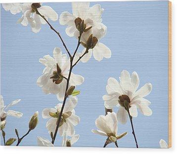 Magnolia Flowers White Magnolia Tree Flowers Art Spring Baslee Troutman Wood Print by Baslee Troutman