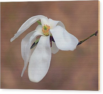 Wood Print featuring the photograph Magnolia Grace by Nikolyn McDonald