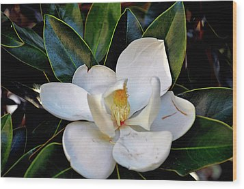 Wood Print featuring the photograph Magnolia by Helen Haw
