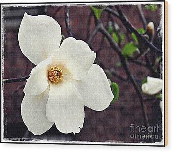 Magnolia Memories 2 Wood Print by Sarah Loft