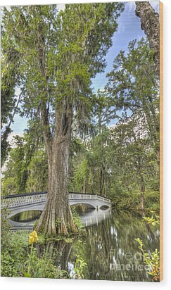 Magnolia Plantation Cypress Tree Wood Print by Dustin K Ryan