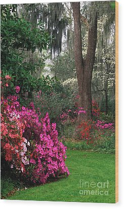 Wood Print featuring the photograph Magnolia Plantation - Fs000148a by Daniel Dempster