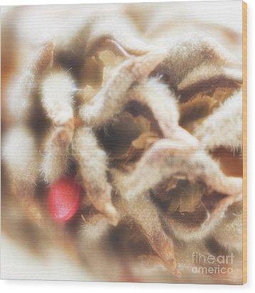 Wood Print featuring the photograph Magnolia Seedpod by Elena Nosyreva