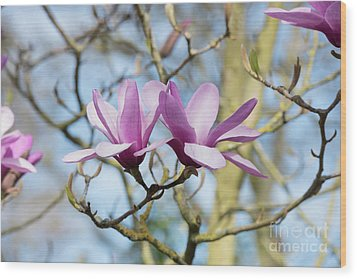 Wood Print featuring the photograph Magnolia Serene Flowers by Tim Gainey