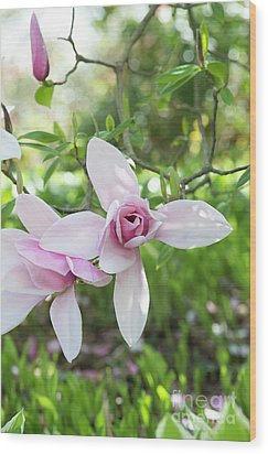 Wood Print featuring the photograph Magnolia Star Wars Flower by Tim Gainey