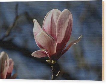 Magnolia Tree Bloom Wood Print by Martin Morehead