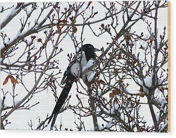 Magpie In A Snowstorm Wood Print by Will Borden