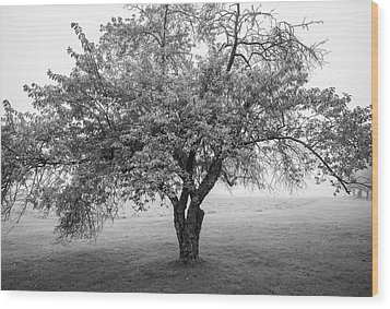 Wood Print featuring the photograph Maine Apple Tree In Fog by Ranjay Mitra