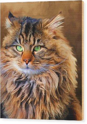 Maine Coon Cat Wood Print by Jai Johnson