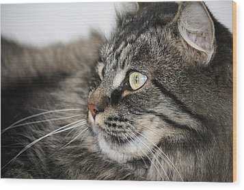 Maine Coon Cat Wood Print by Mary-Lee Sanders
