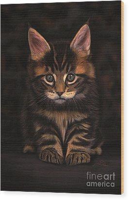 Maine Coon Kitty Wood Print by Sabine Lackner