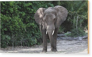 Majestic African Elephant Wood Print by Mary Haber