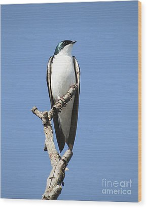 Majestic Wood Print by Anita Oakley
