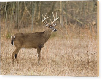 Wood Print featuring the photograph Majestic Buck by Timothy McIntyre