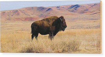 Majestic Buffalo In Kansas Wood Print