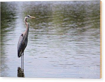 Majestic Great Blue Heron Wood Print