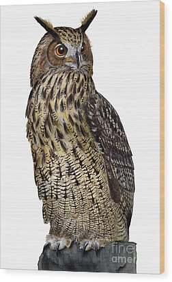 Wood Print featuring the painting Majestic Eurasian Northern Eagle Owl Bubo Bubo - Hibou Grand-duc - Buho Real - Nationalpark Eifel by Urft Valley Art