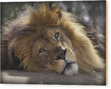 Majestic Love Wood Print by Linda Mishler