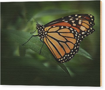 Majestic Monarch Wood Print by Marie Leslie