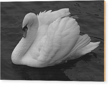 Majestic Mute Swan Wood Print by Pierre Leclerc Photography
