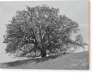 Majestic Oak Wood Print