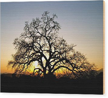 Majestic Oak Tree Sunset Wood Print