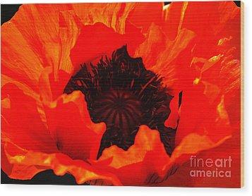 Majestic Poppy Wood Print by Stephen Melia